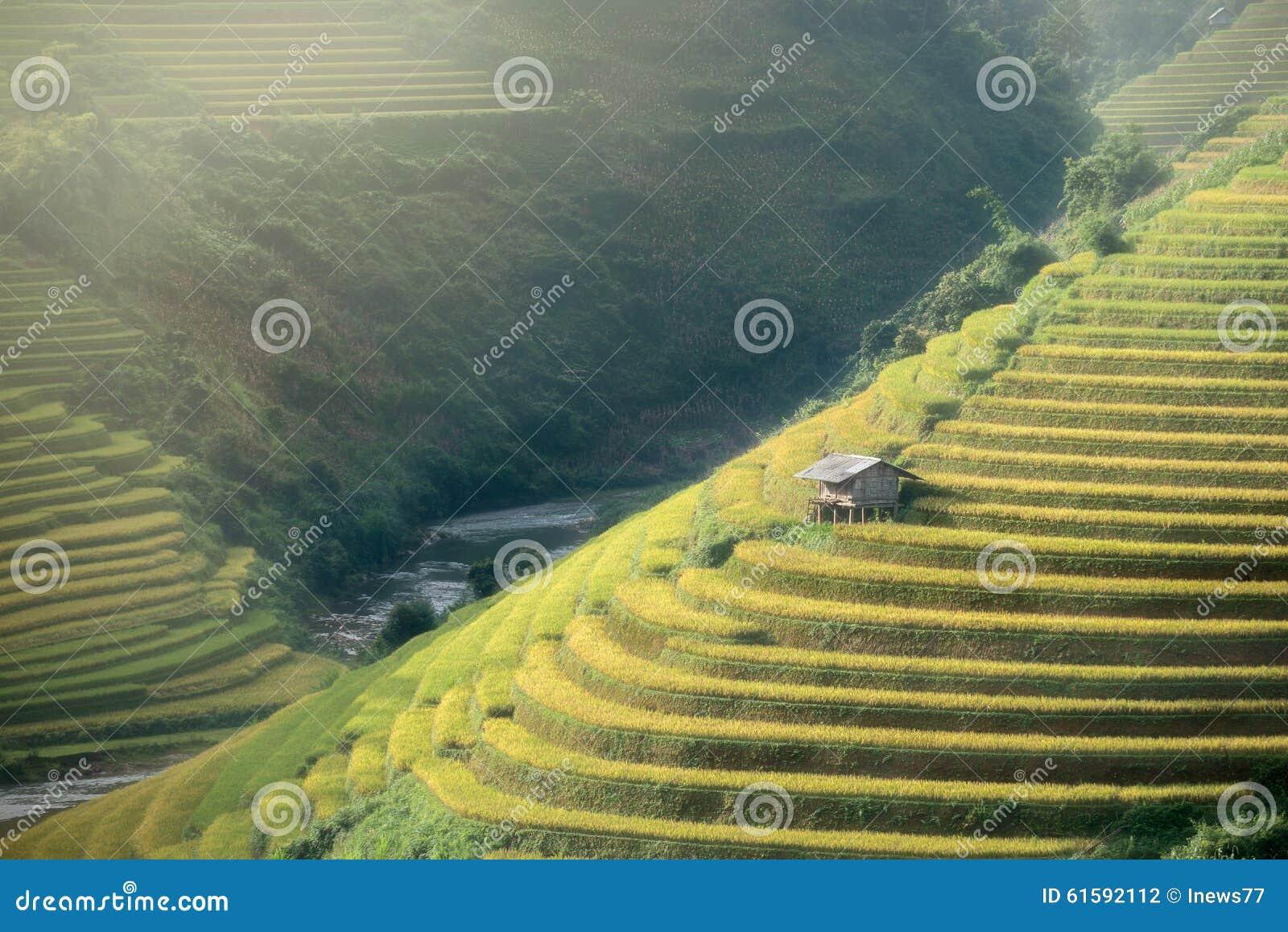 Le riz met en place sur en terrasse de la MU Cang Chai, YenBai, Vietnam Riz f