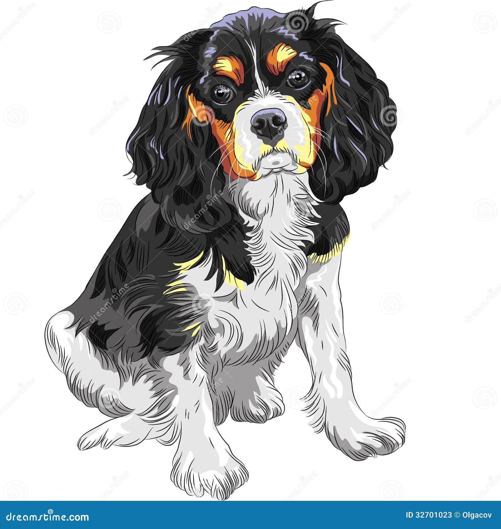 Le Roi cavalier Charles Spaniel de chien de vecteur