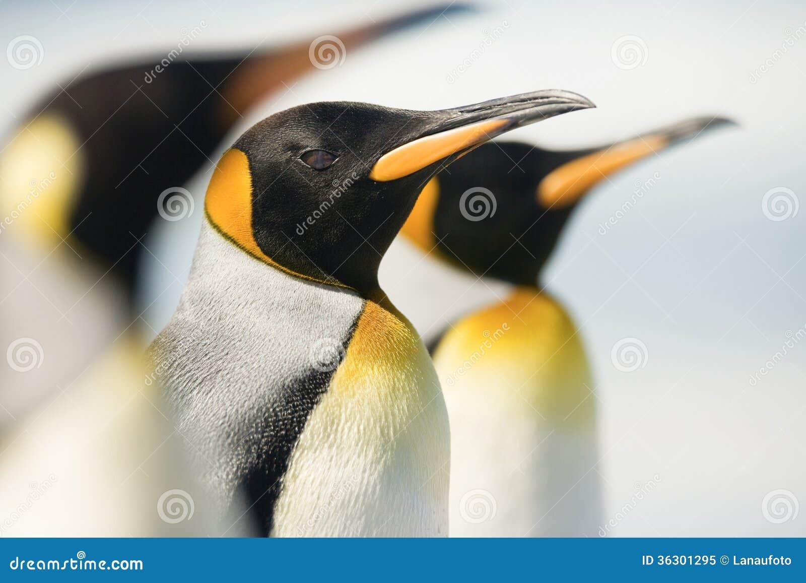 Le Roi Penguin