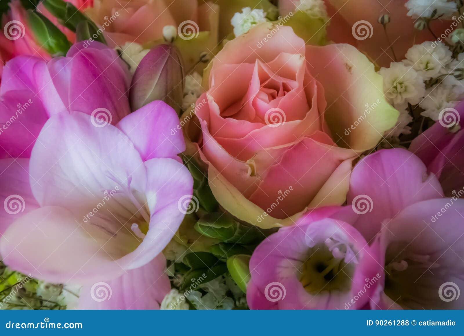 Le rose doux fleurit le fond
