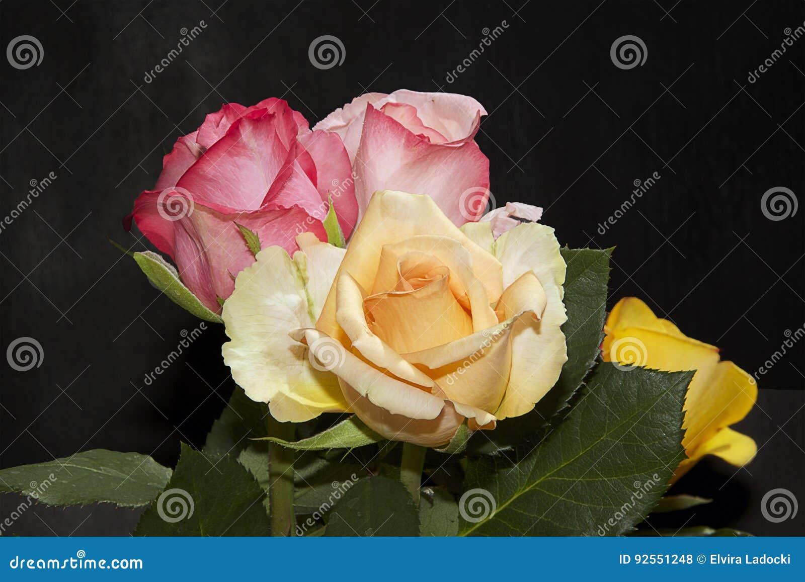Le rose si chiudono in su