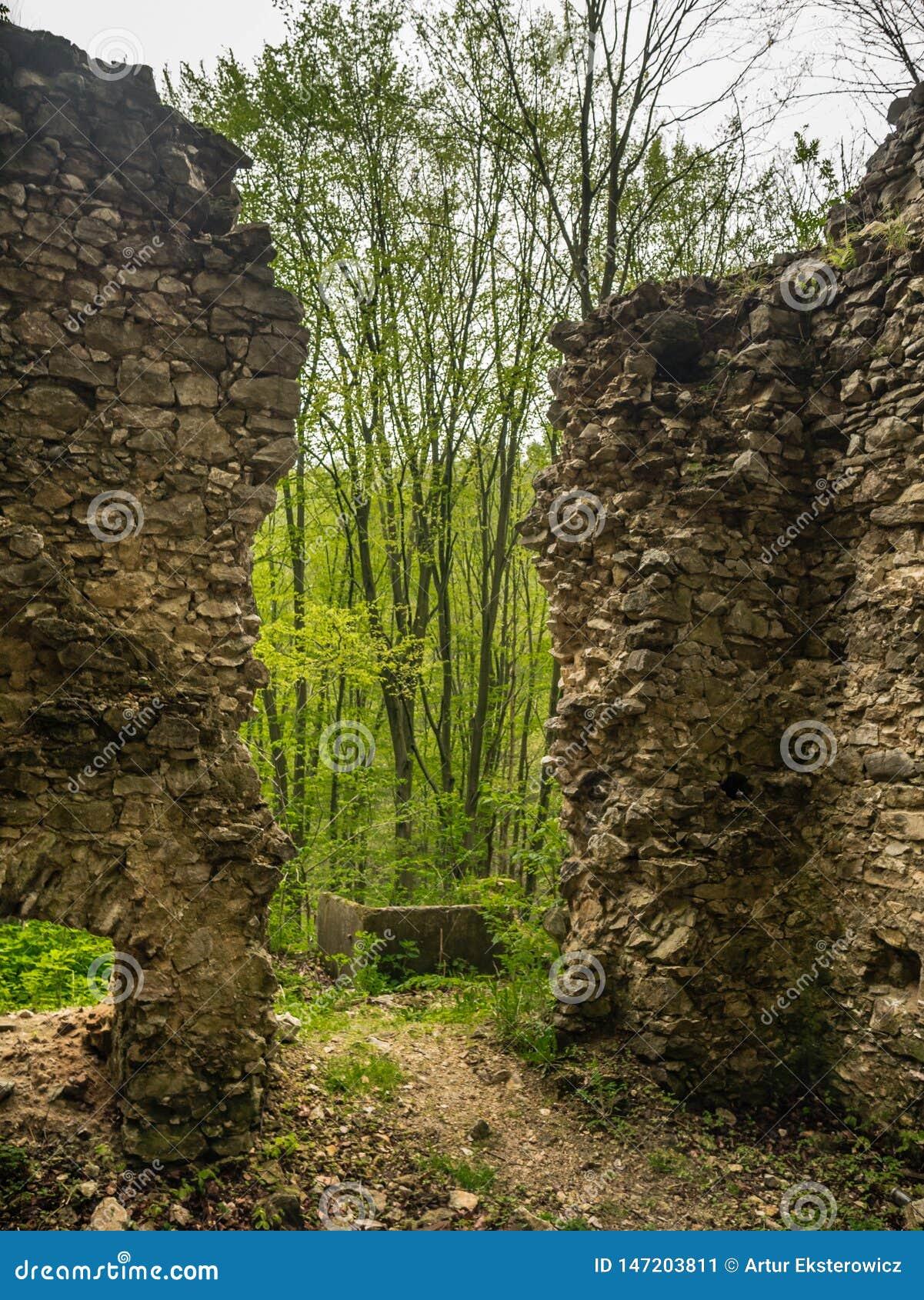 Le rovine di una costruzione nella foresta