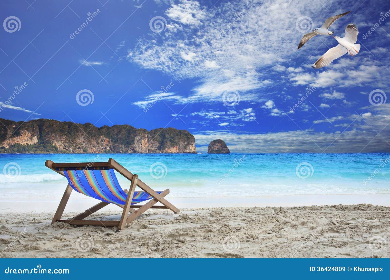 Le sedie di legno tirano al mare con il bello gabbiano che - Uccelli che sbattono contro le finestre ...