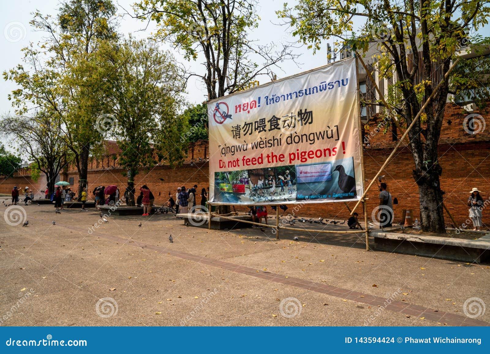 """Le signe """"n alimentent pas les pigeons à la porte de Thapae"""
