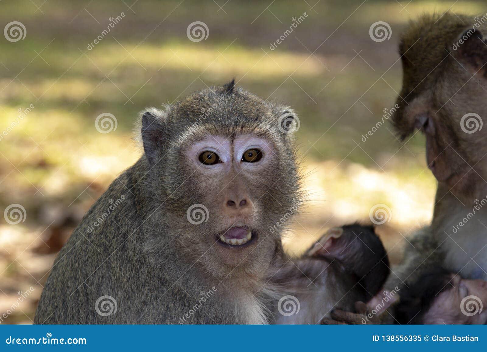 Le singe de Macaque de longue queue embrasse son bébé, reposant et regardant nous avec des yeux et la bouche grande ouverte