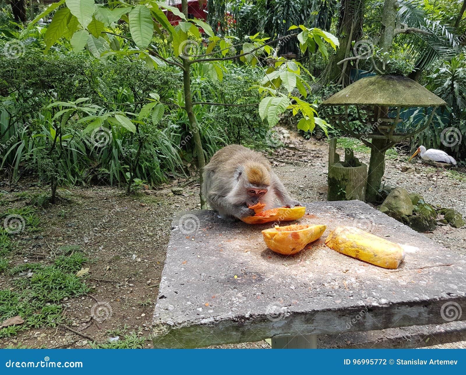 Le singe mange