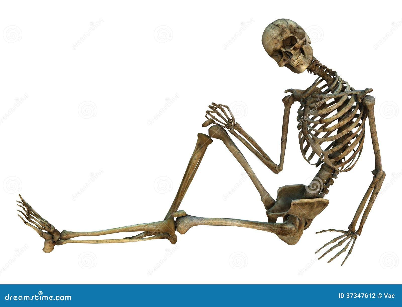 Le skelettet