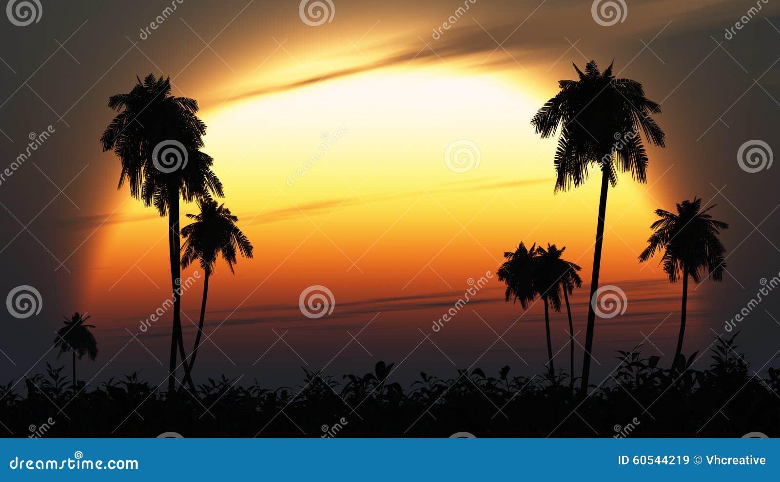 Le soleil crépusculaire tropical accentue des silhouettes de paume