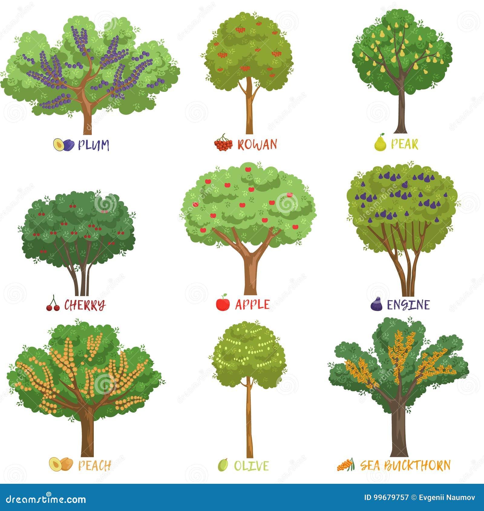 Le specie differenti degli alberi da frutto con i nomi for Alberi da frutto prezzi