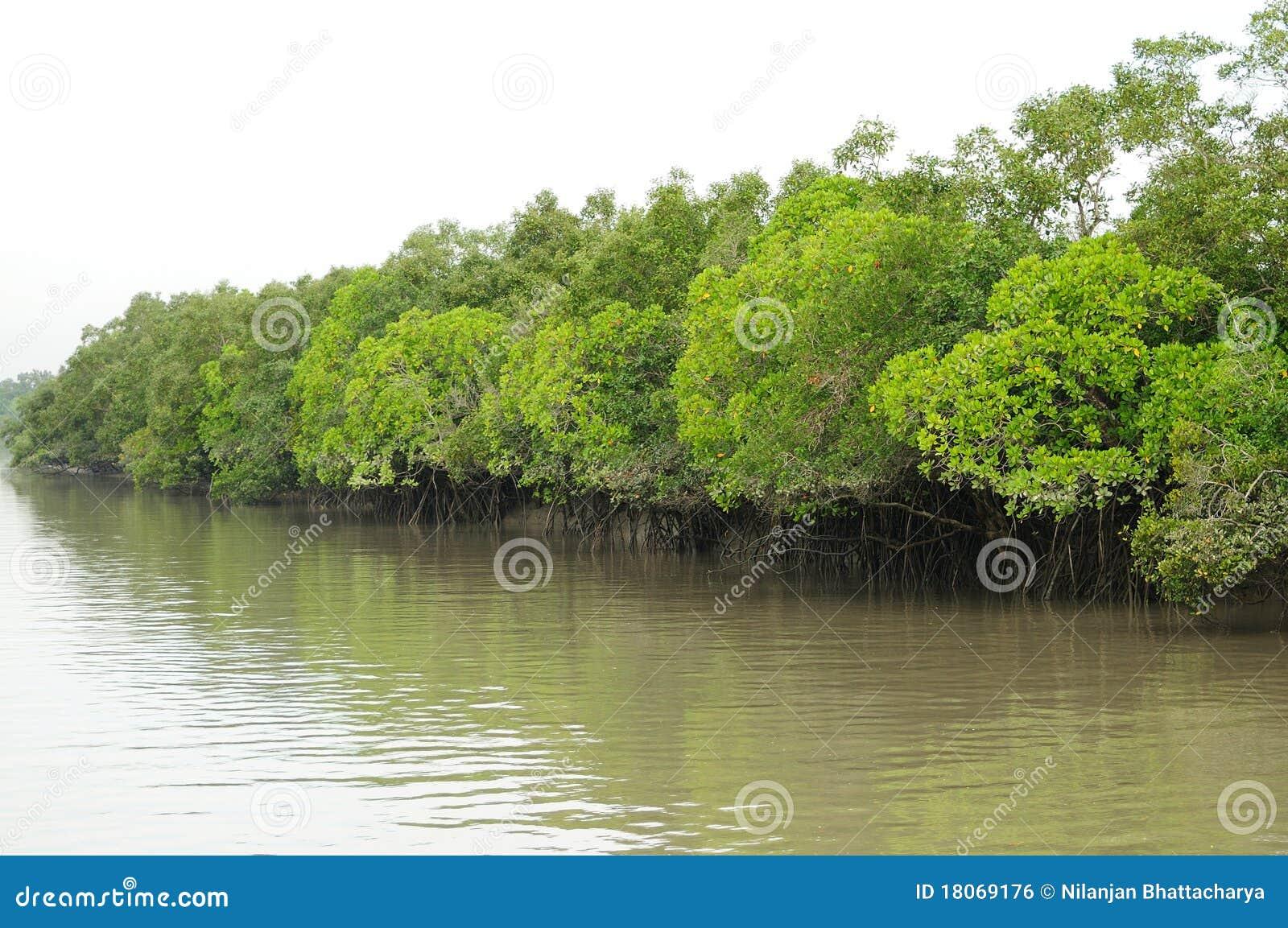 Le Sundarbans