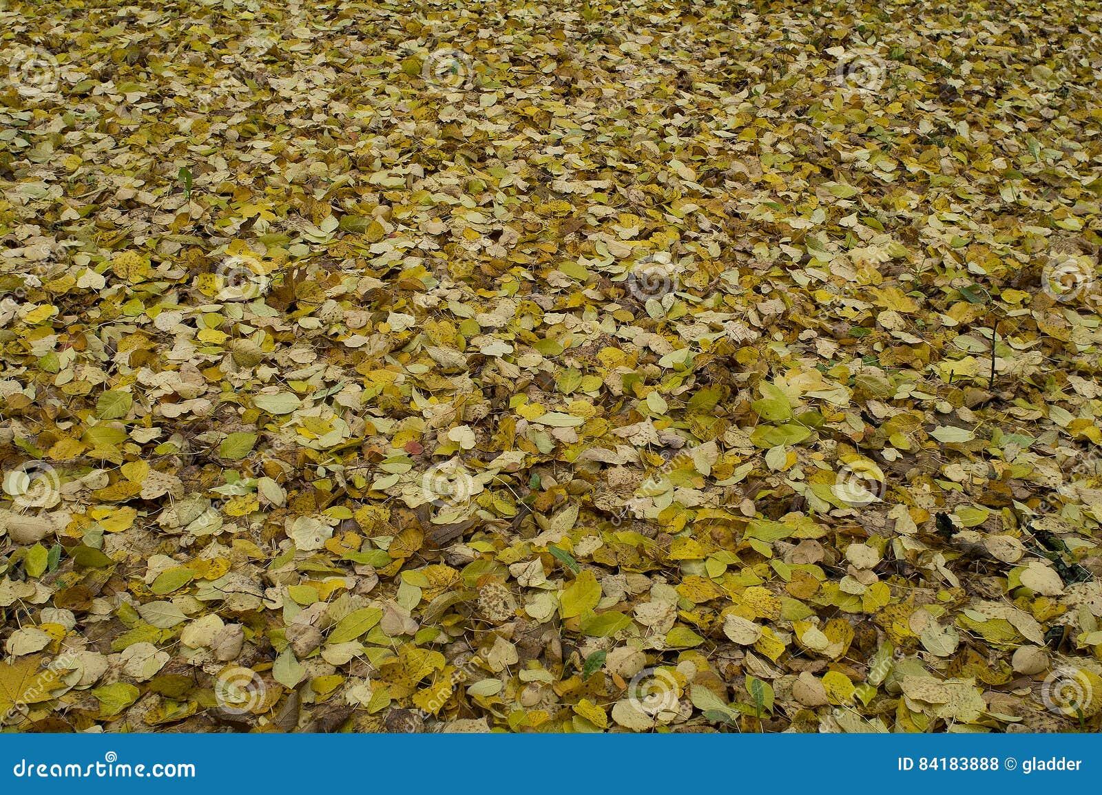Le tapis du jaune laisse le mensonge au sol en automne