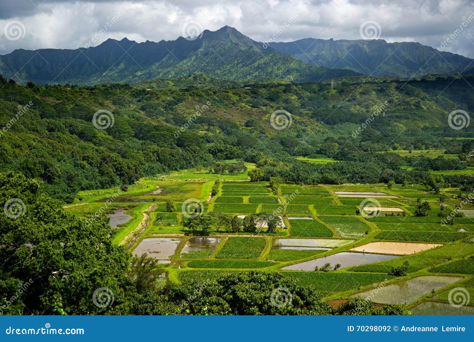 Le taro de vallée de Kauai Hanalei met en place scénique donnent sur