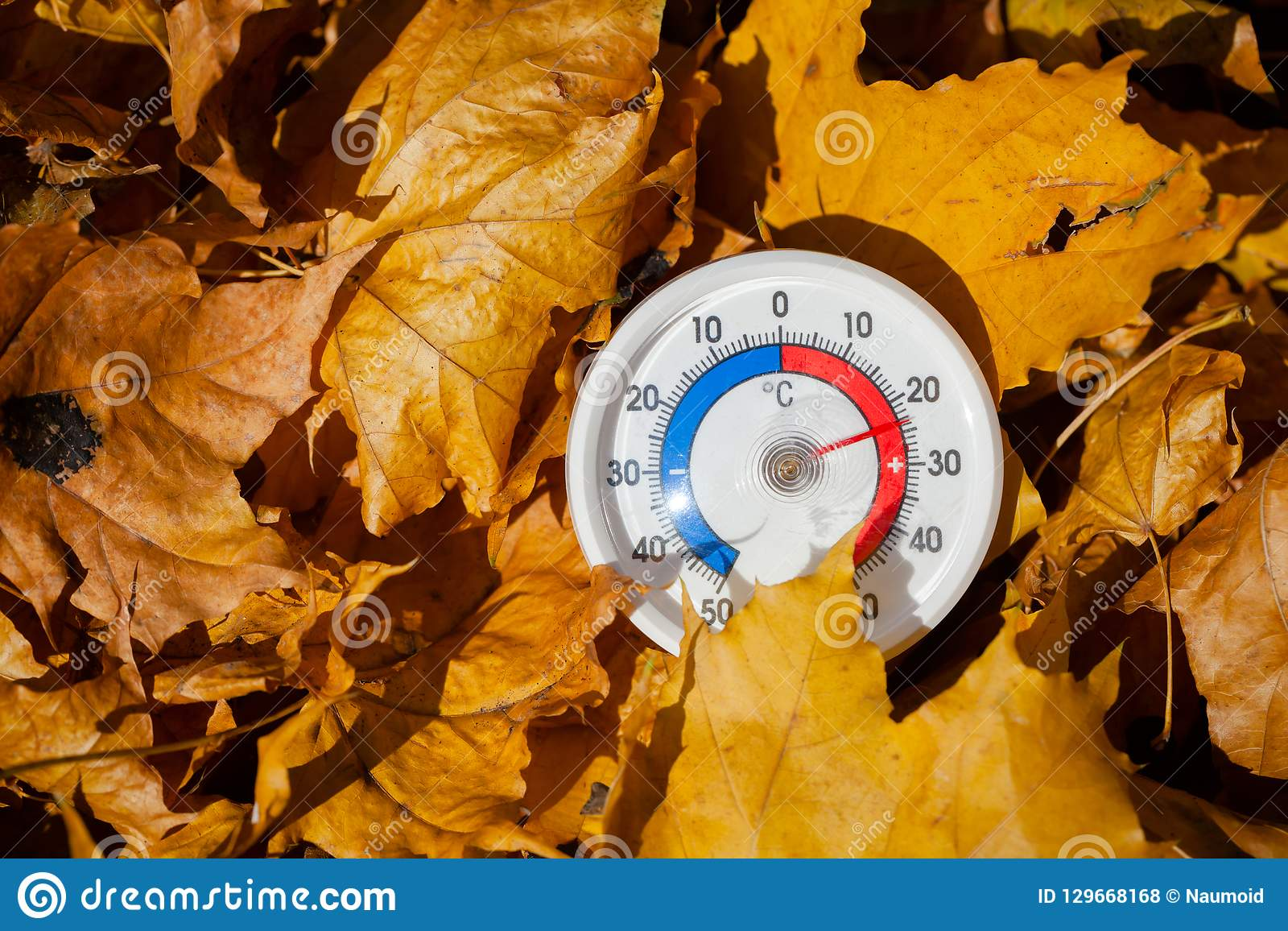 Le thermomètre extérieur dans des feuilles d or d érable montre le temperatur chaud