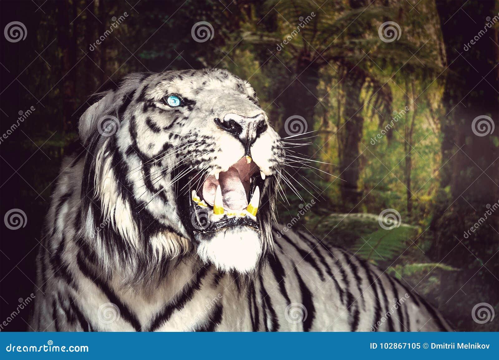 Le tigre blanc baîlle sur le fond vert de feuillage
