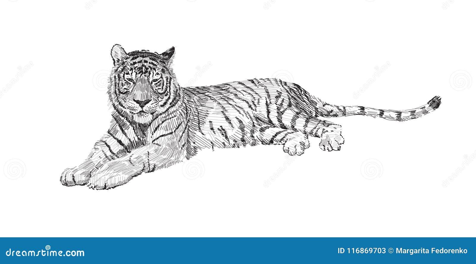 Le Tigre Se Trouve Dessin Noir Et Blanc De Graphiques De Vecteur De
