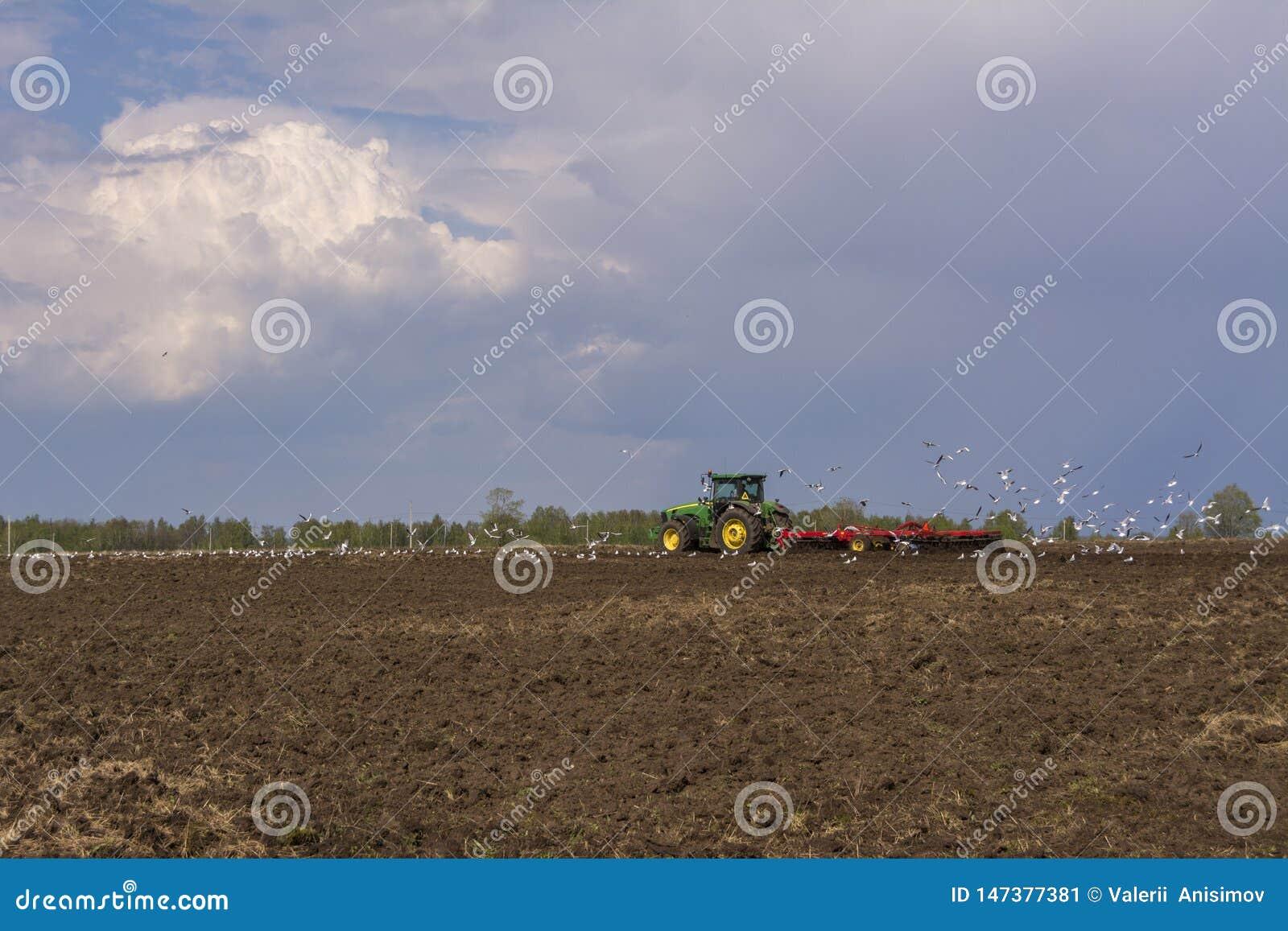 Le tracteur laboure le champ Une vol?e des oiseaux entourant au-dessus du champ