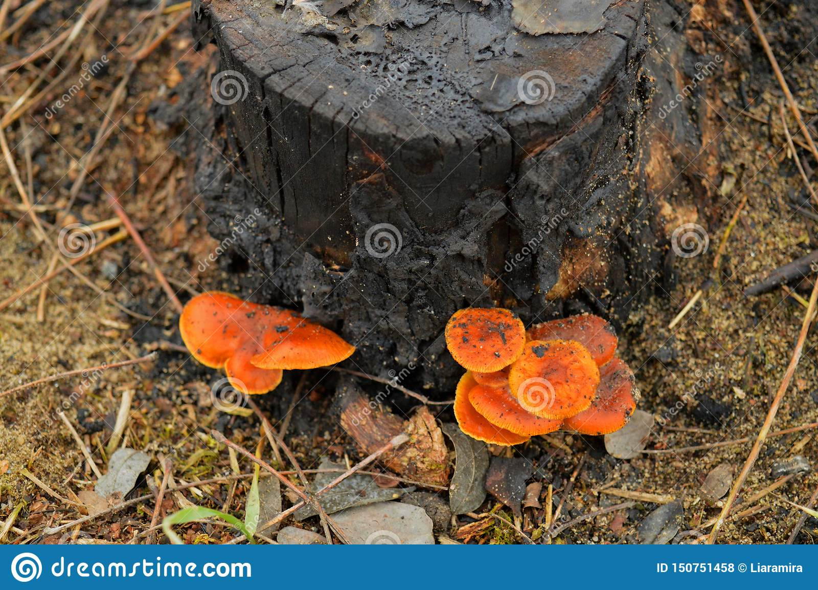 Le tronçon avec des champignons dans la forêt
