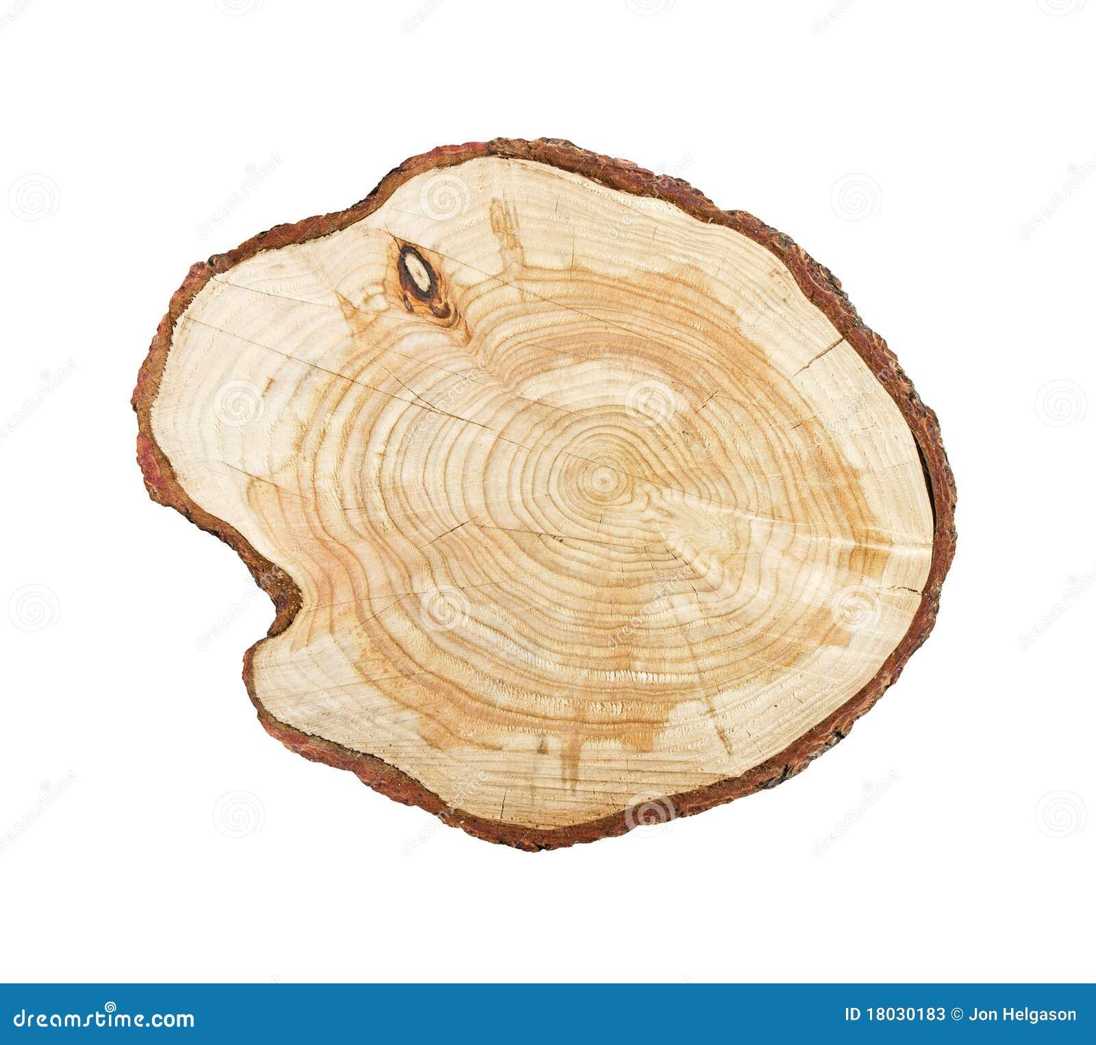 Le tronçon d arbre a isolé