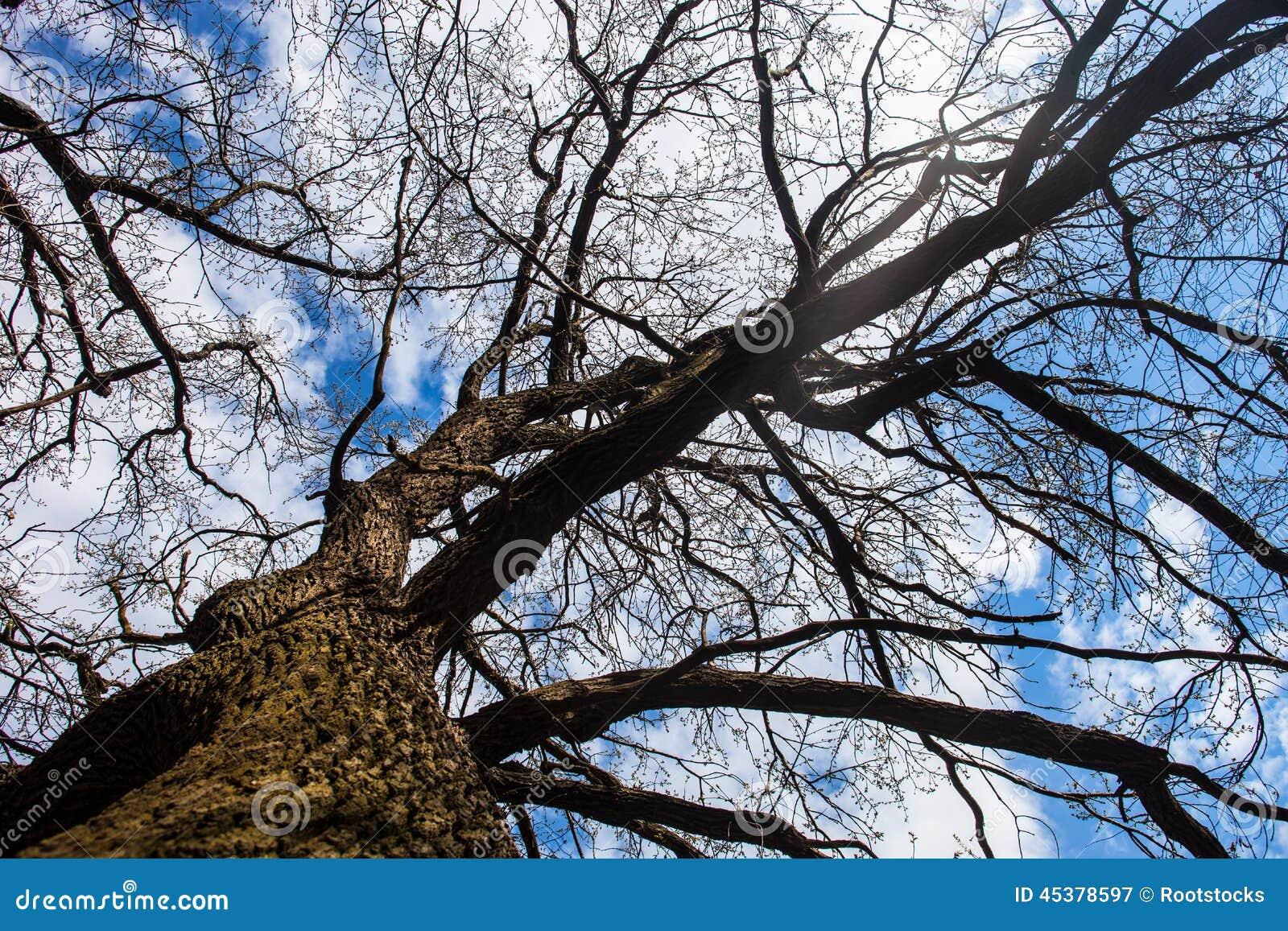 Le sexe contre l'arbre