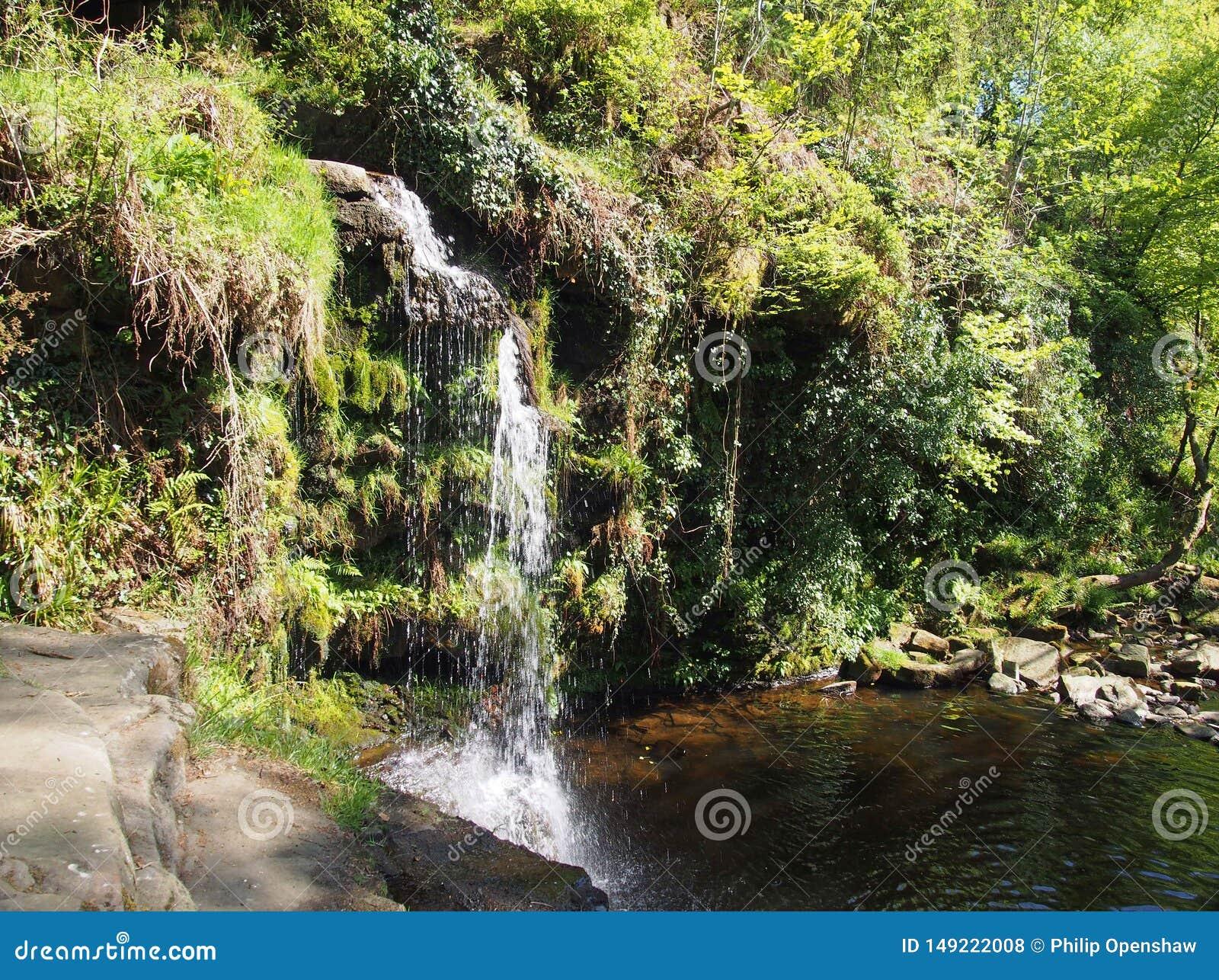 Le trou de Lumb tombe cascade dans la région boisée au doyen de crimsworth près du pecket bien dans le calderdale West Yorkshire