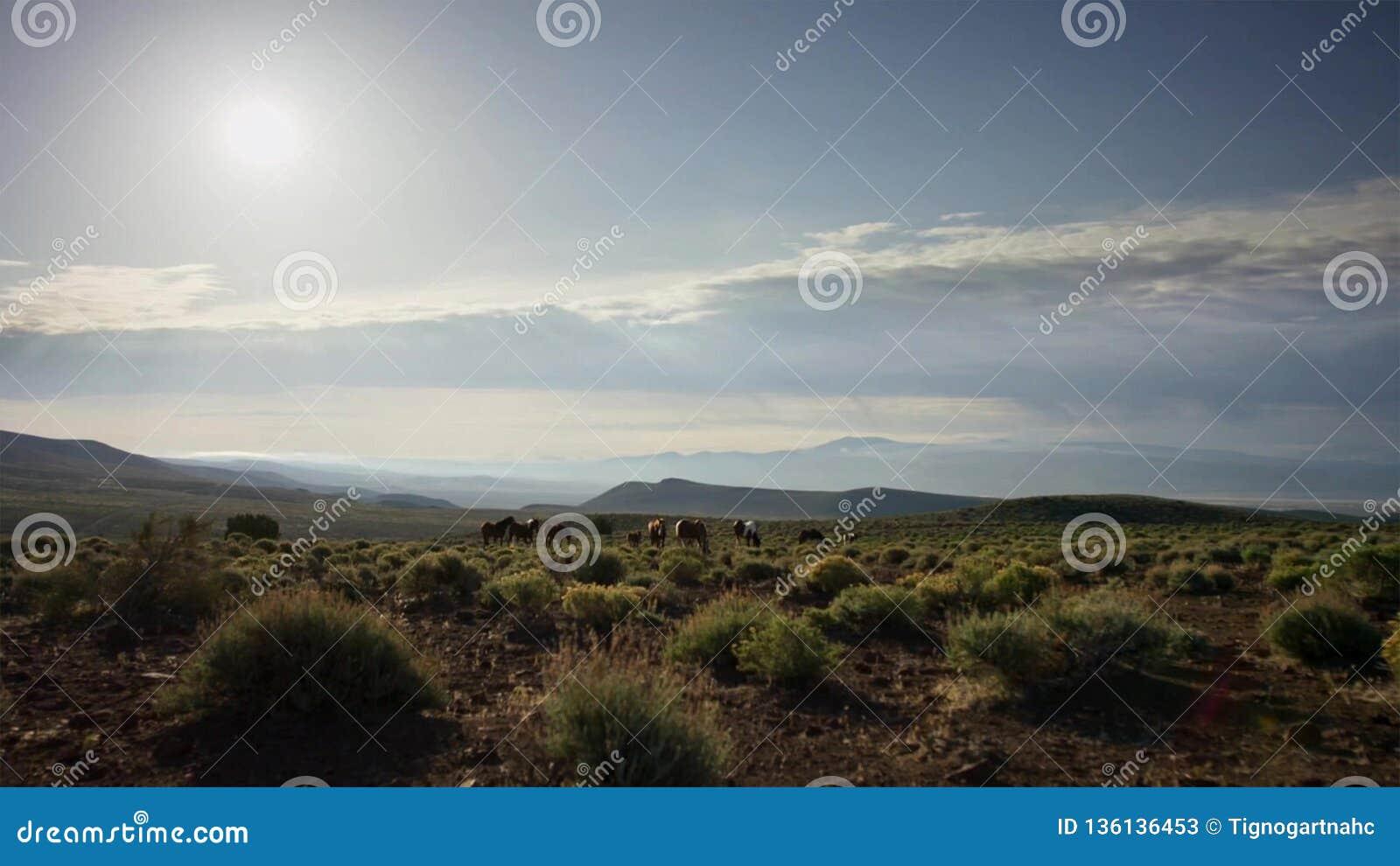 Le troupeau de chevaux dans les montagnes Chevaux frôlant dans le pré contre le ciel bleu