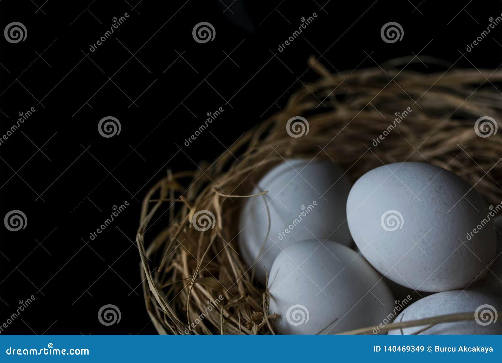Le uova bianche in uova rivoltano il fieno su un fondo nero, fine su, isolato