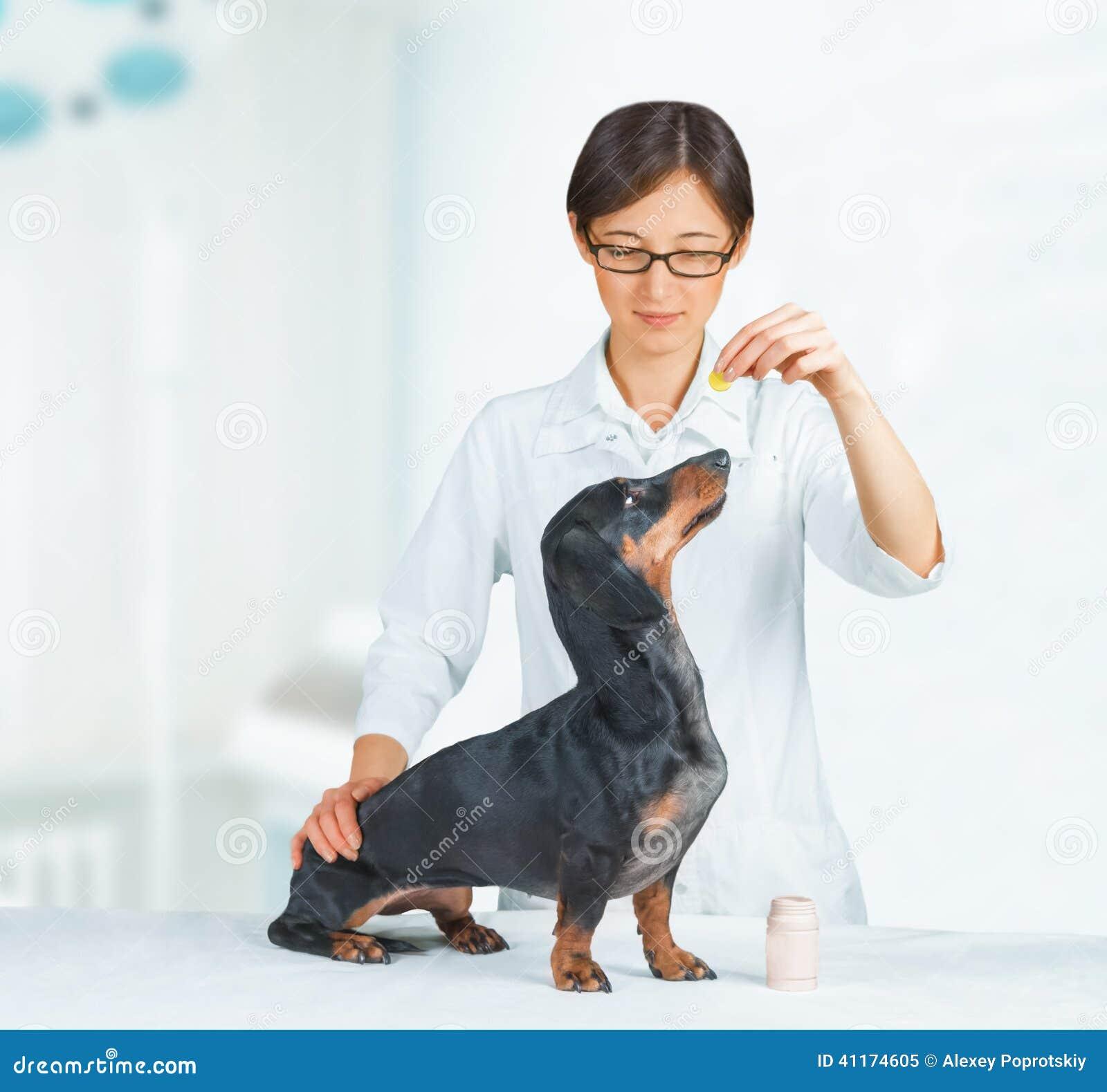 Le Vétérinaire Tient Le Médicament Pour Le Chien Photo
