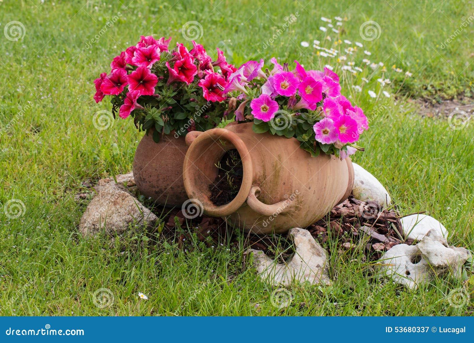 Le Vecchie Anfore Ceramiche Con La Petunia Rosa E Rossa Fiorisce
