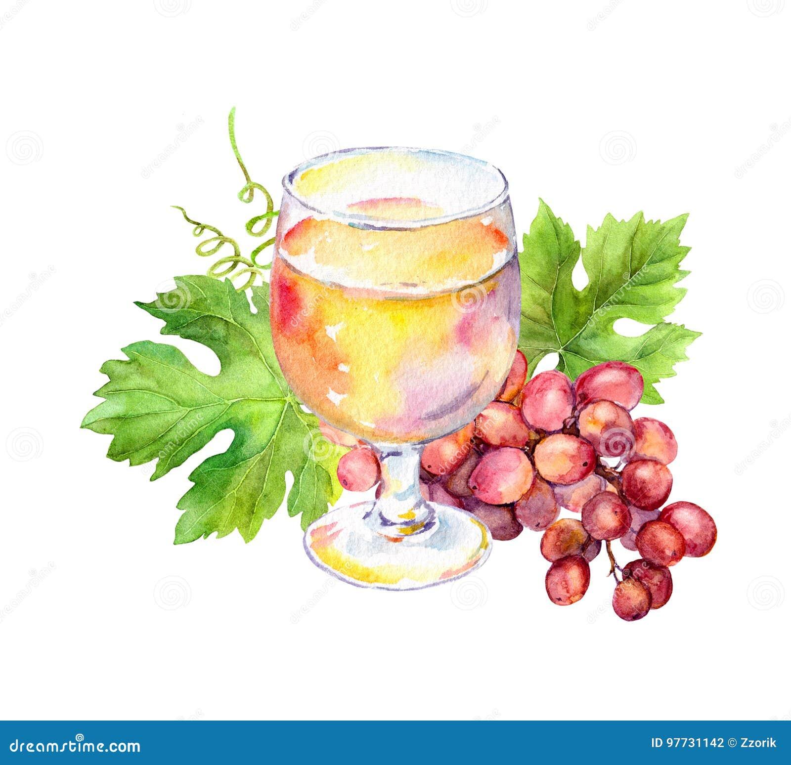 Le verre de vin rose avec la vigne part, des baies de raisin watercolor