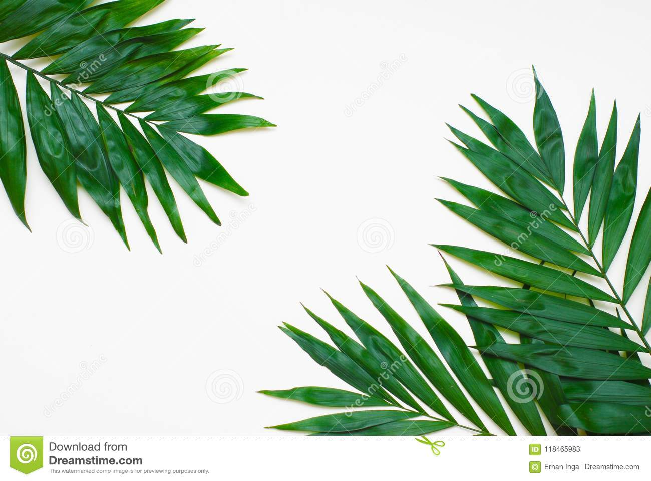 Le vert de paume laisse l arbre exotique tropical Isoalted sur le fond blanc Holliday Patern Template