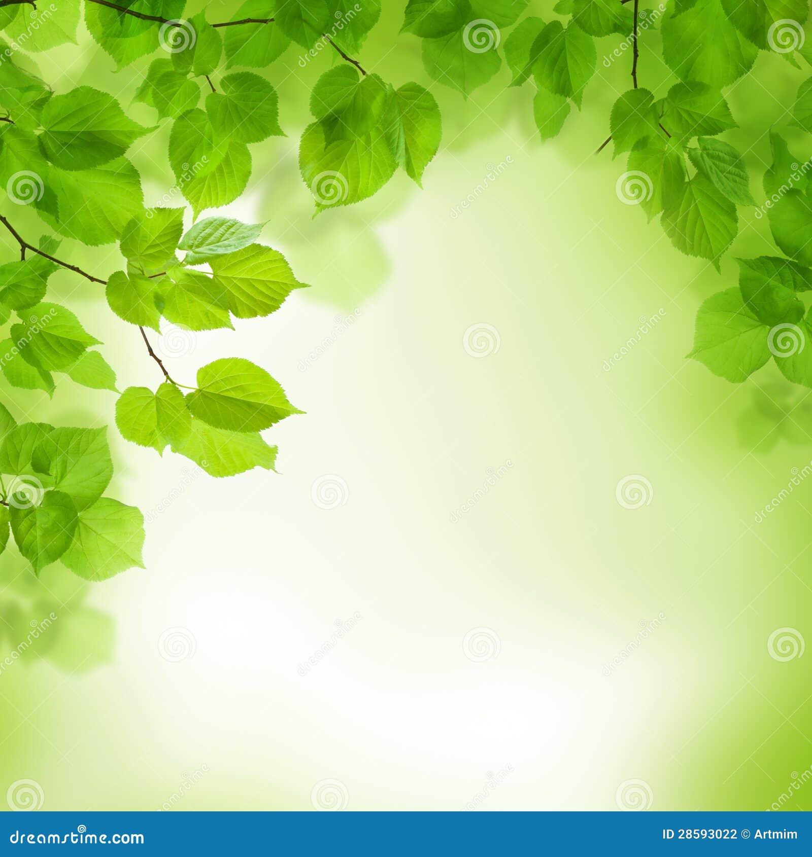 Le vert laisse le cadre, fond abstrait