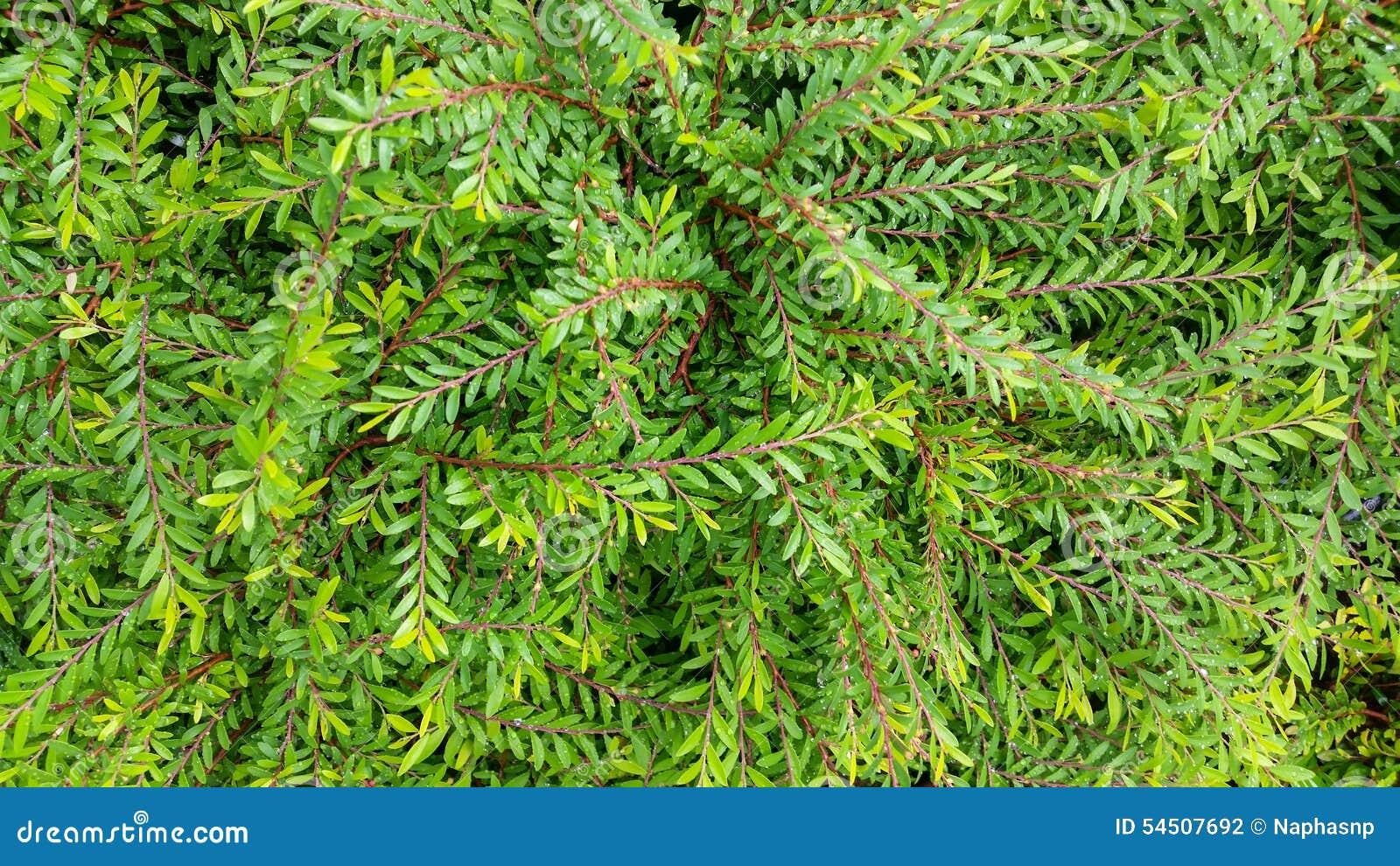 Le vert laisse le fond de textures