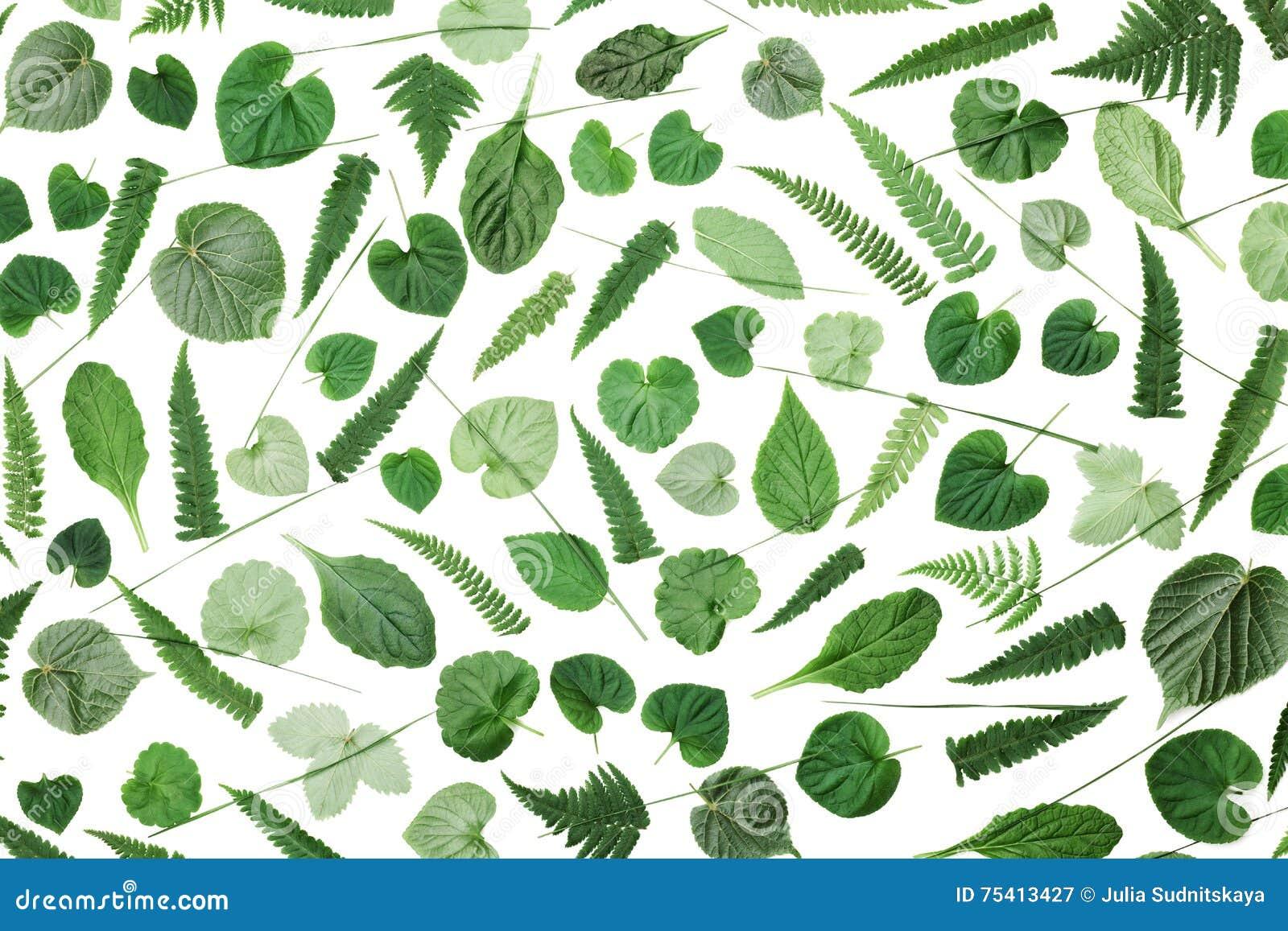 Le vert laisse le modèle d isolement sur la vue supérieure de fond blanc Dénommer plat de configuration