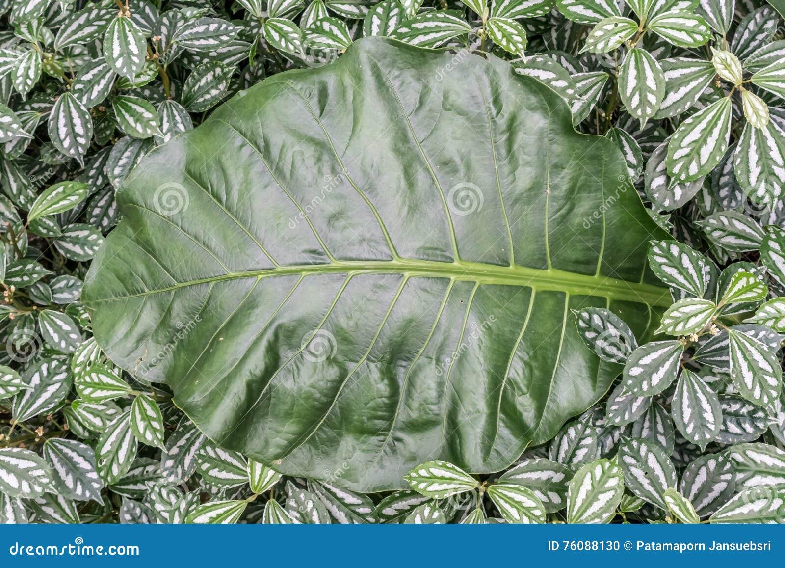Le vert laisse le plancher