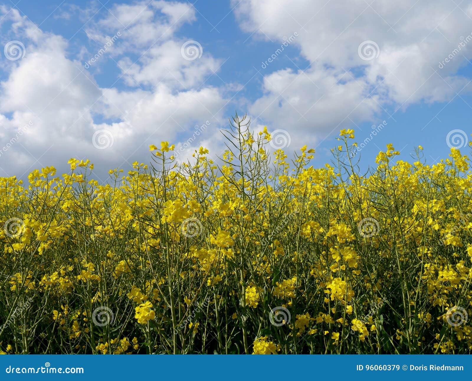 Le vert met en place la forêt Allemagne d usines de nature du soleil d été