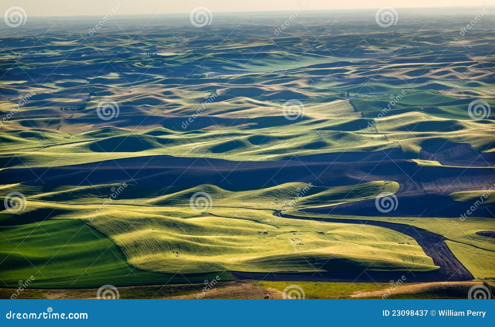 Le vert met en place les configurations de cordon noires Palouse