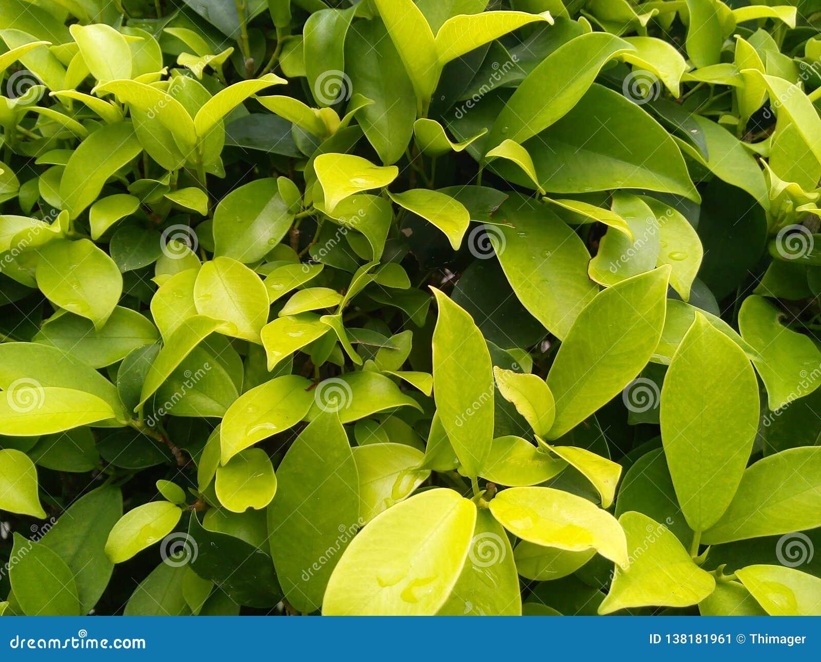 Le vert pluvieux laisse le fond de texture