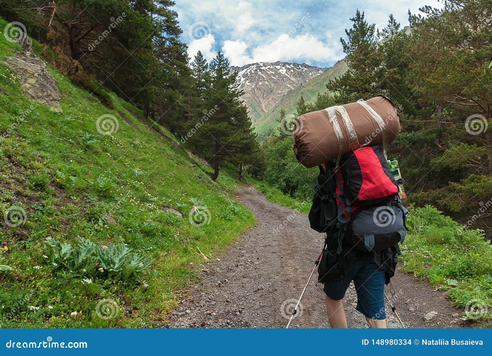 Le voyageur avec le sac à dos et la tente monte la route de montagne par des montagnes de Caucase de forêt, gorge Terskol