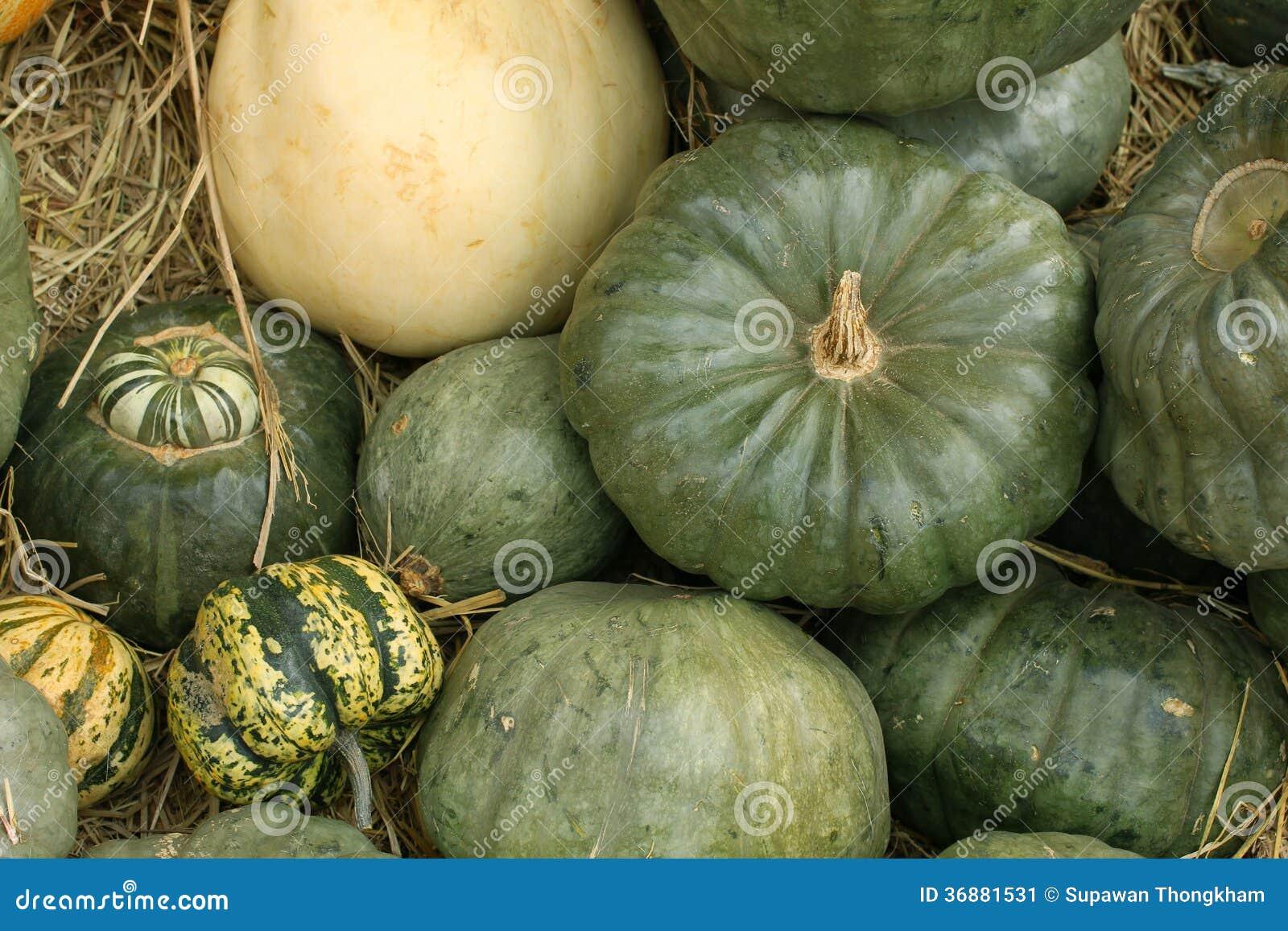 Download Le zucche autunnali immagine stock. Immagine di arancione - 36881531