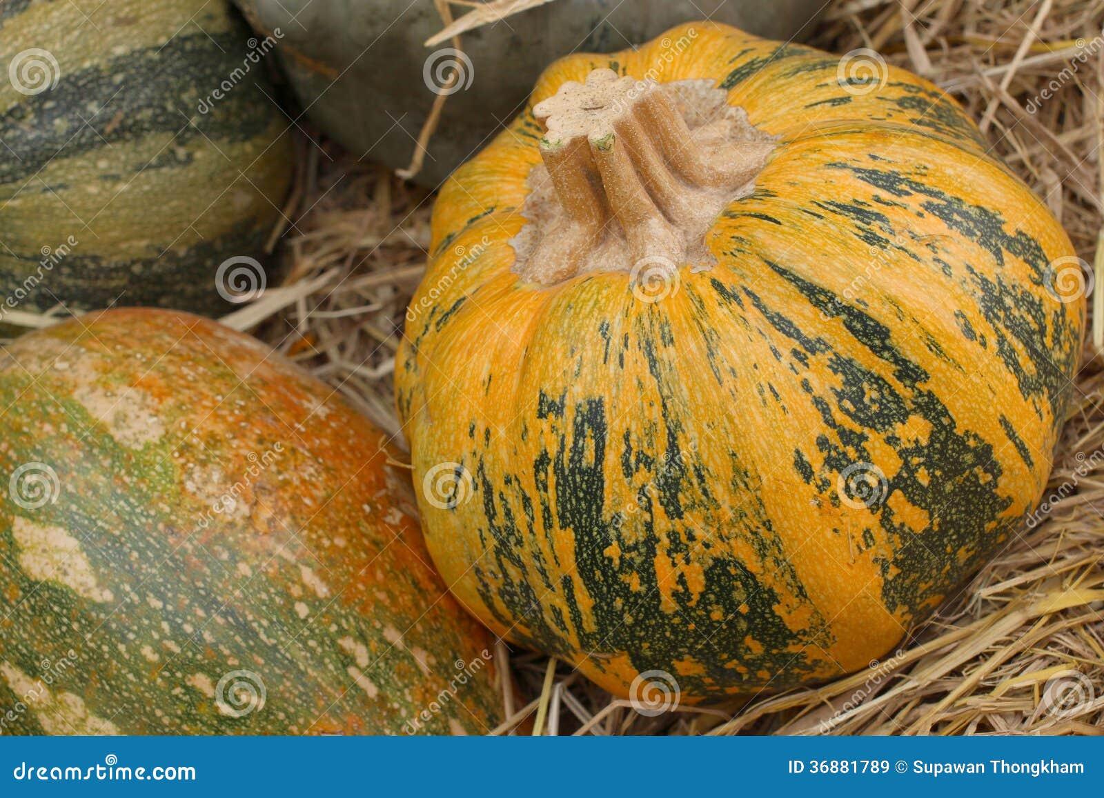 Download Le zucche autunnali immagine stock. Immagine di zucca - 36881789