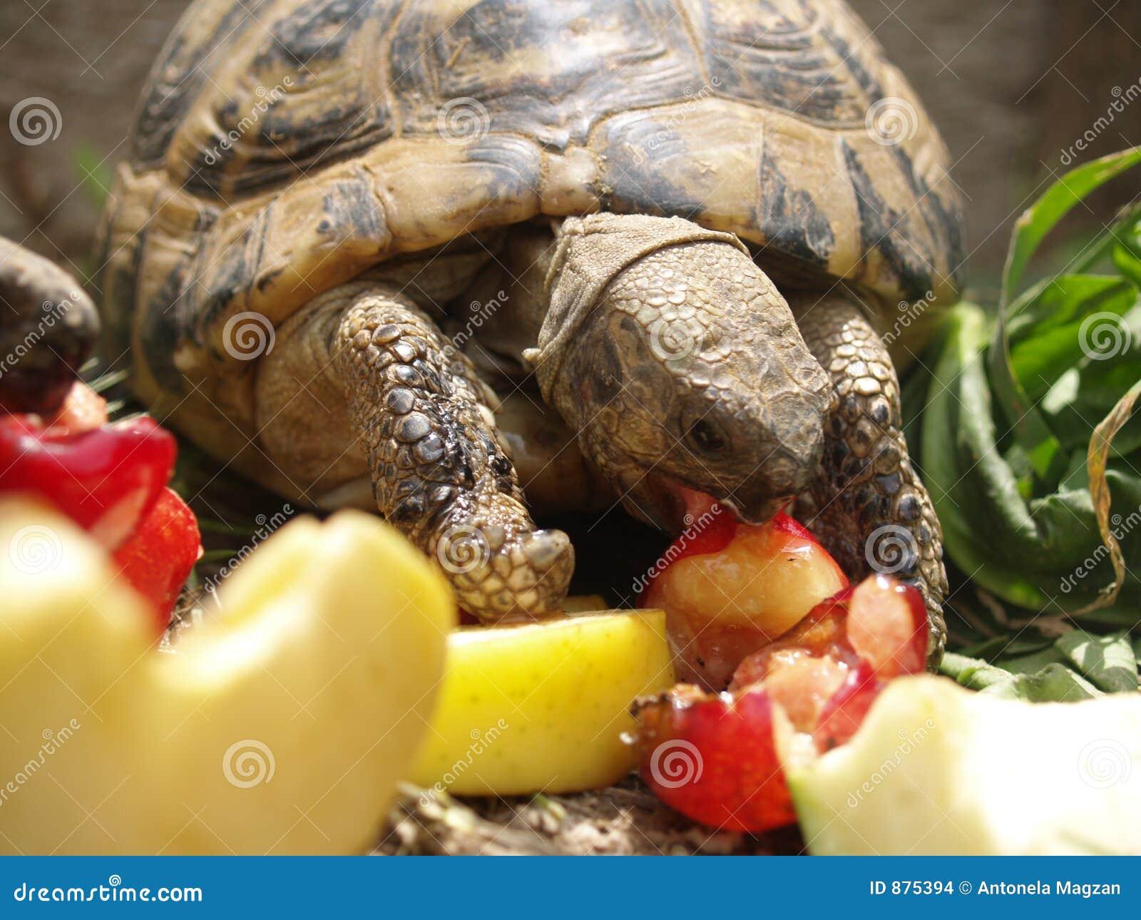 Lea to żółw