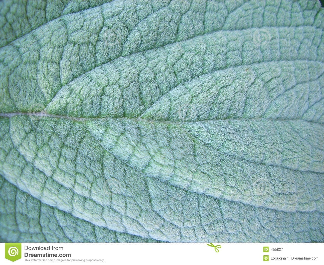 Download Leaf stock image. Image of fuzzy, background, leaf, texture - 455837
