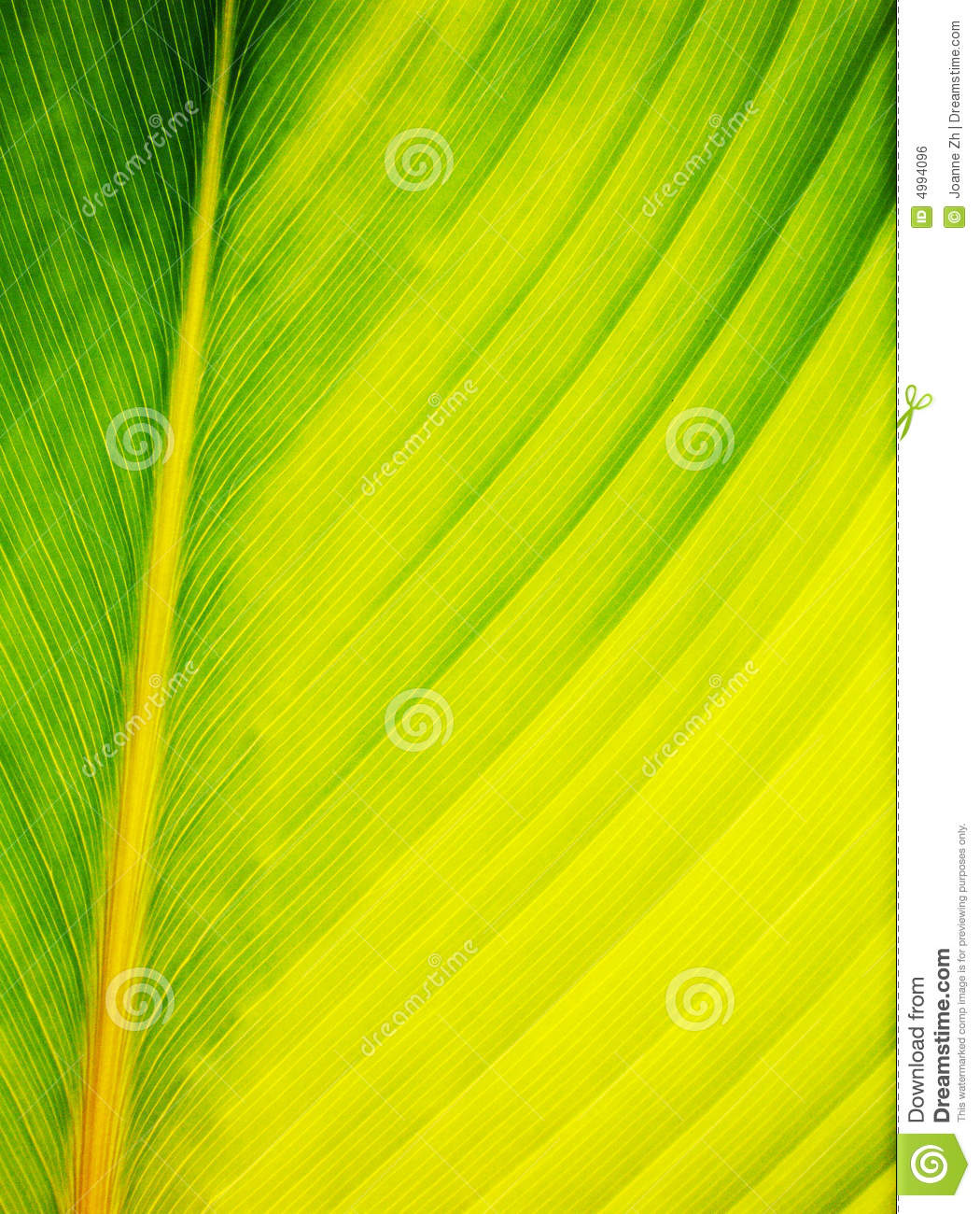 Leaf abstract close up