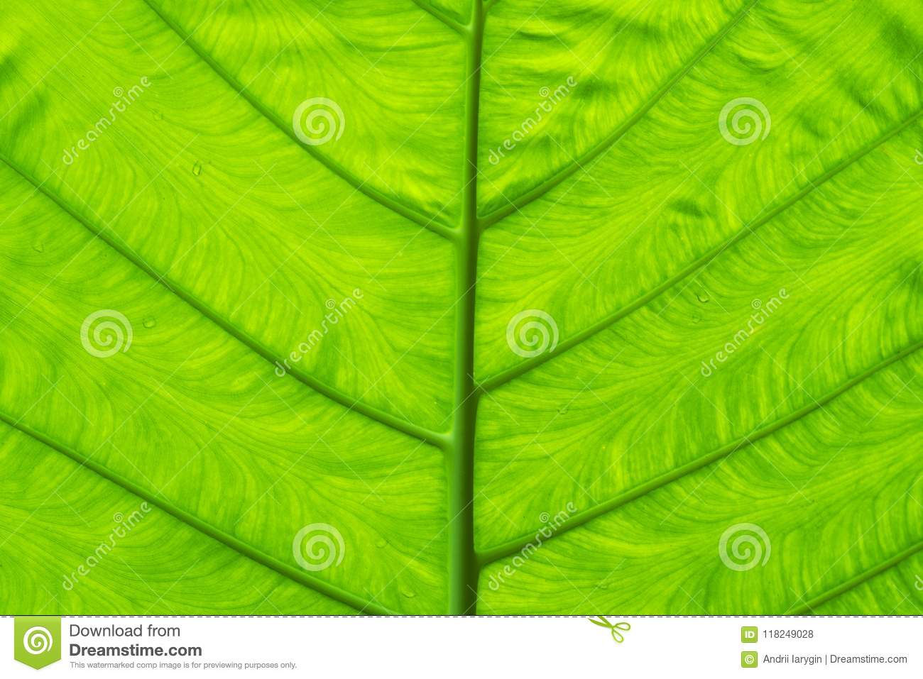 nature wallpaper bright green leaf color stock photo - image of