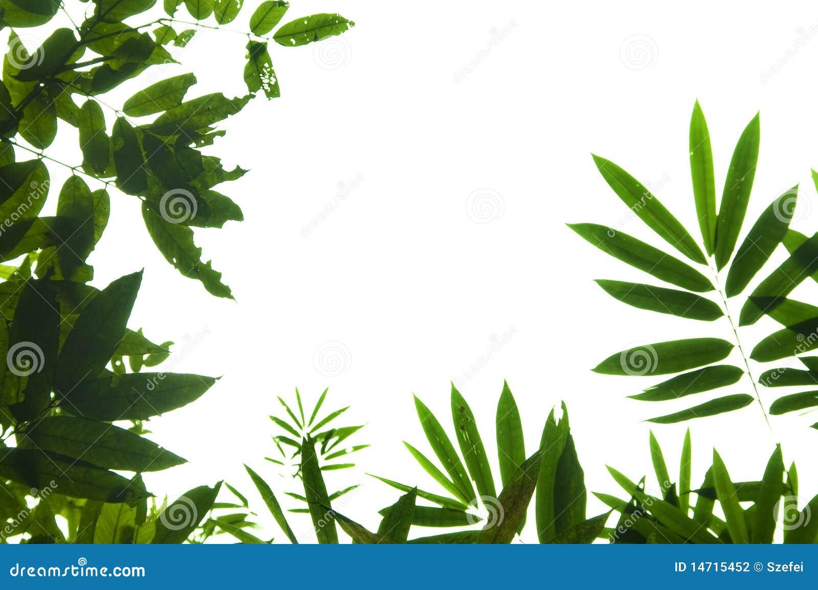 Leaf Border Stock Photography - Image: 14715452