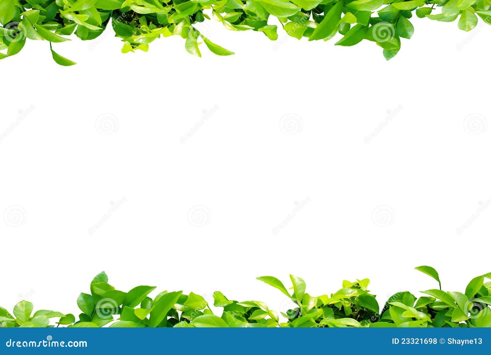 Leaf border stock photo. Image of nature, frame, garden - 23321698