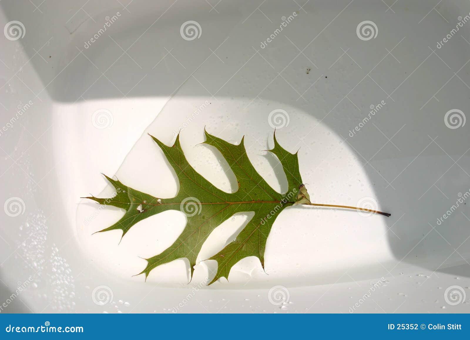 Leaf in a bucket