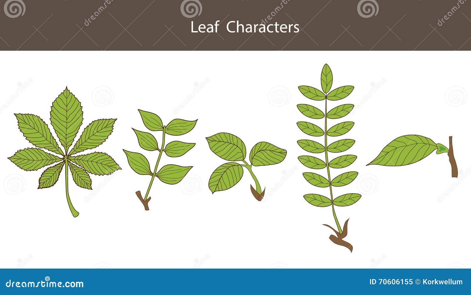 Maple Leaf PNG, SVG Clip art for Web - Download Clip Art ...