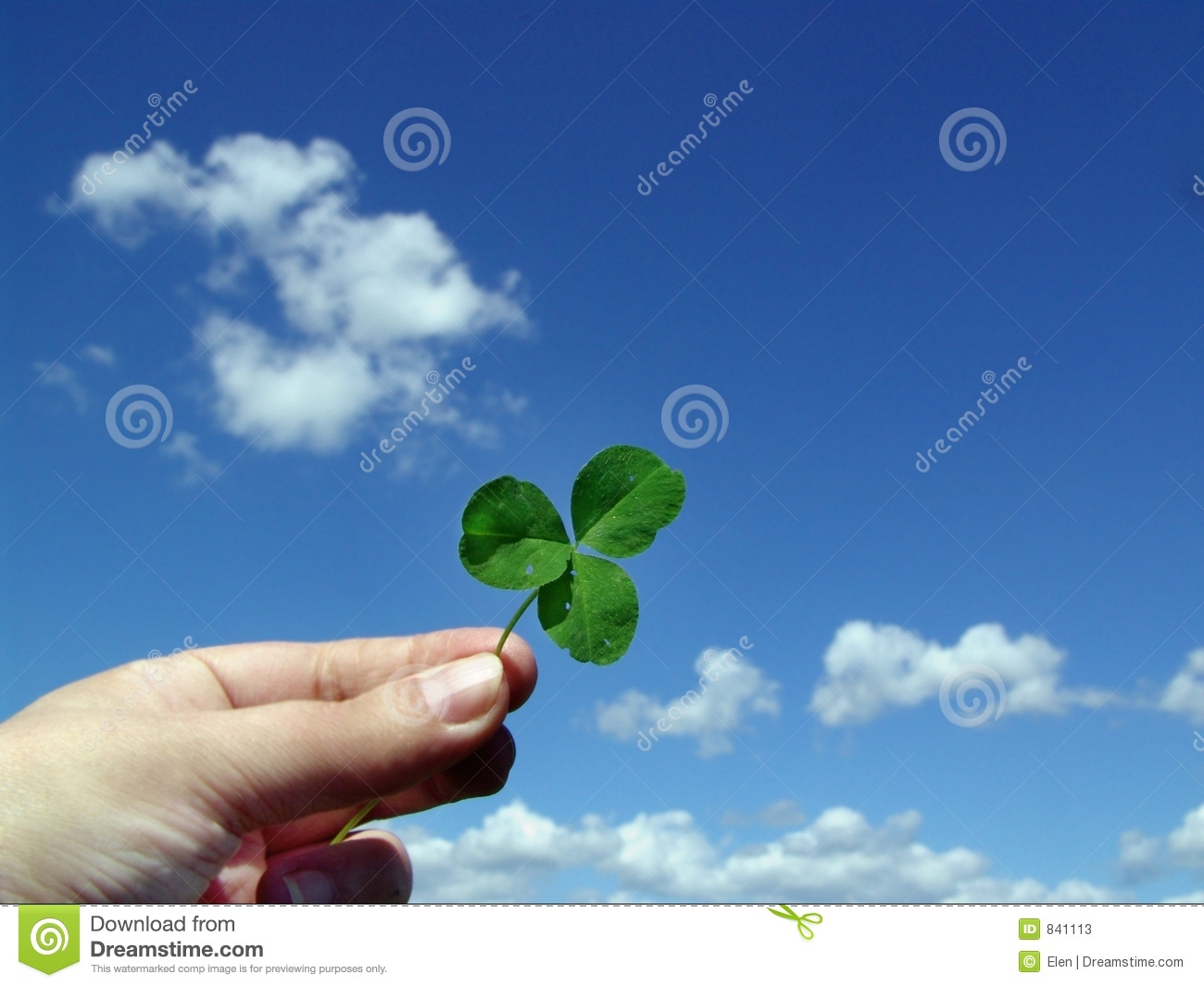 Leaf of clover in hand