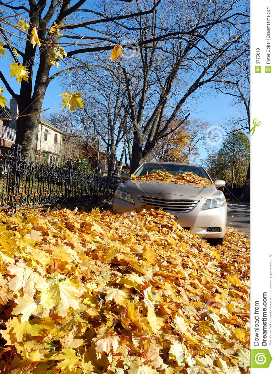 Leaf Covered Car Stock Image Image Of Yellow Front